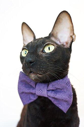 Kotomoda CAT WEAR Bow tie Violet B0796HDZSX