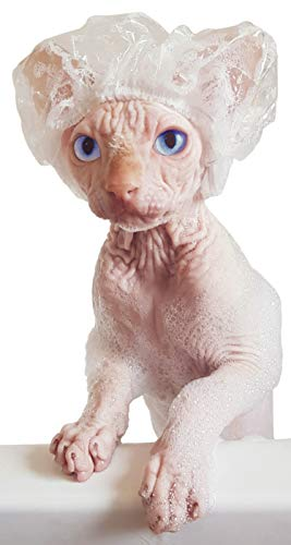 Kotomoda Shower Caps for Sphynx Cats and small pets 20pcs B07WTNQQRM